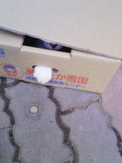 箱入りむすめ